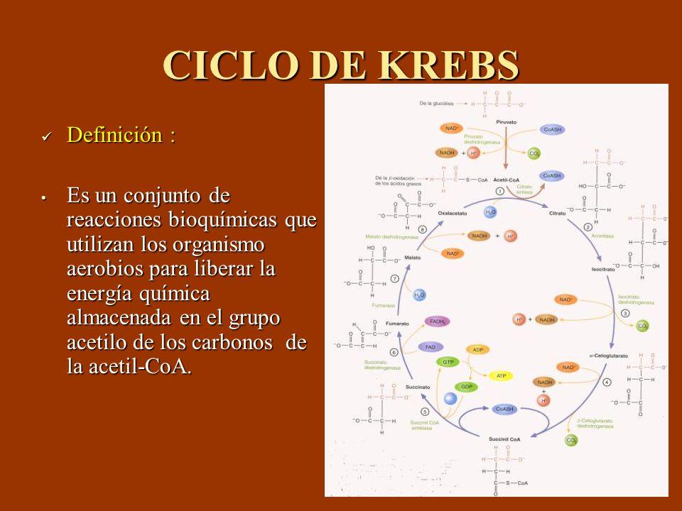 CICLO DE KREBS Definición : Definición : Es un conjunto de reacciones bioquímicas que utilizan los organismo aerobios para liberar la energía química