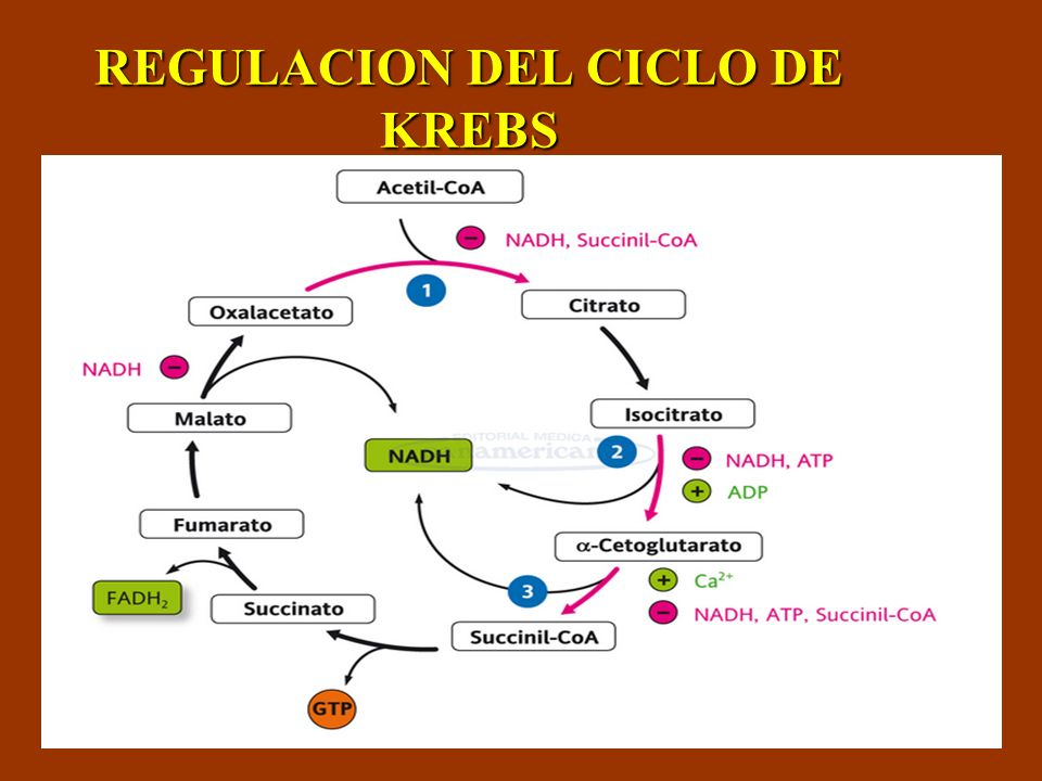 REGULACION DEL CICLO DE KREBS