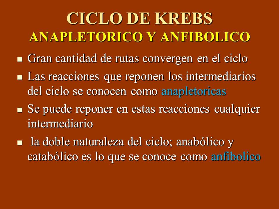 CICLO DE KREBS ANAPLETORICO Y ANFIBOLICO Gran cantidad de rutas convergen en el ciclo Gran cantidad de rutas convergen en el ciclo Las reacciones que