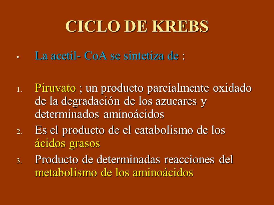 CICLO DE KREBS La acetil- CoA se sintetiza de : La acetil- CoA se sintetiza de : 1. Piruvato ; un producto parcialmente oxidado de la degradación de l