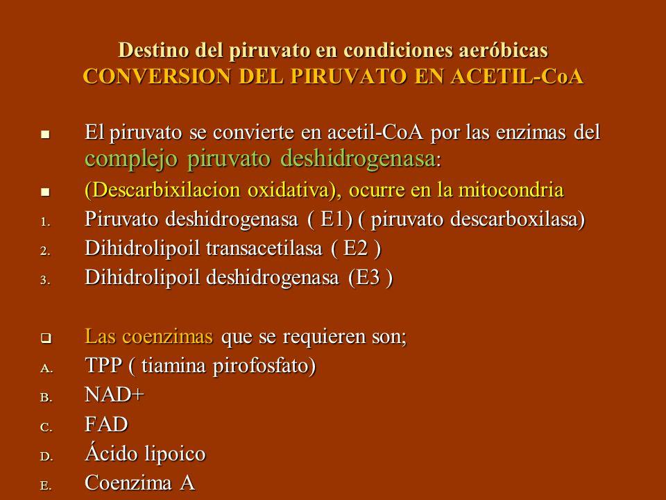 Destino del piruvato en condiciones aeróbicas CONVERSION DEL PIRUVATO EN ACETIL-CoA El piruvato se convierte en acetil-CoA por las enzimas del complej
