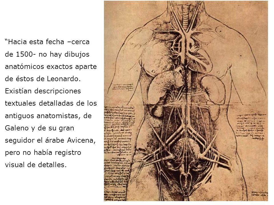 Leonardo, sin embargo, se acercó a la naturaleza para investigarla. Aplicó a problemas científicos el espíritu matemático que dominó el trabajo de sus