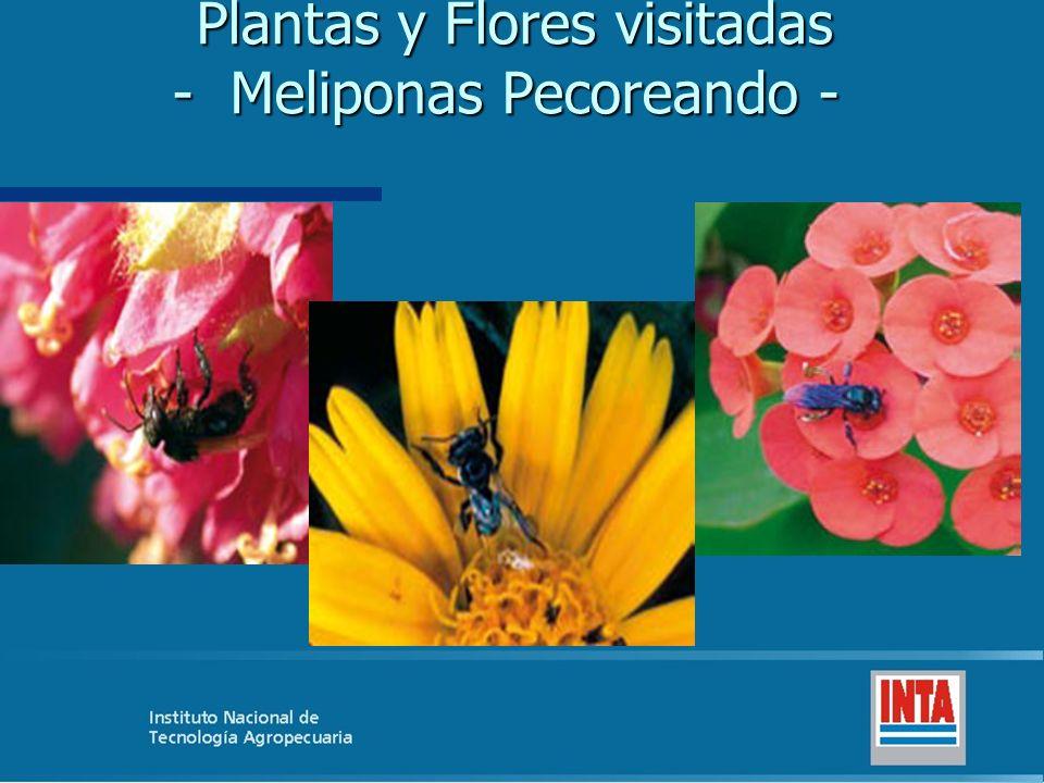 Plantas y Flores visitadas - Meliponas Pecoreando - Plantas y Flores visitadas - Meliponas Pecoreando -