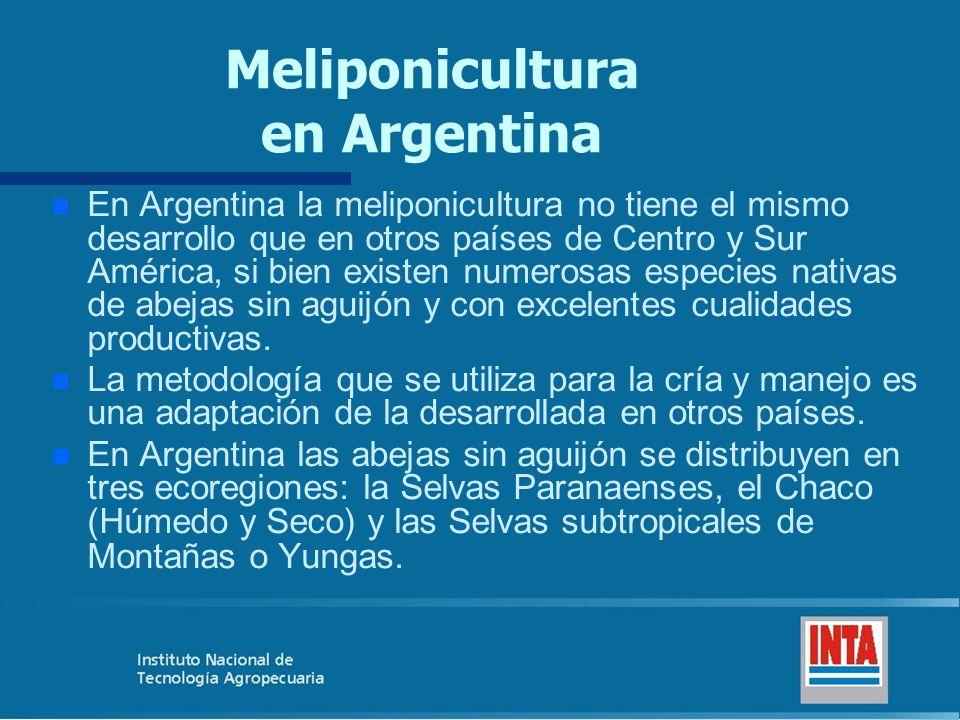 Meliponicultura en Argentina n n En Argentina la meliponicultura no tiene el mismo desarrollo que en otros países de Centro y Sur América, si bien exi
