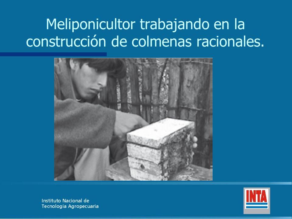 Meliponicultor trabajando en la construcción de colmenas racionales.