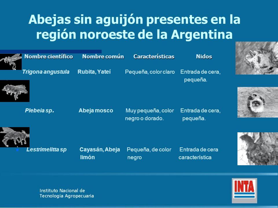 Abejas sin aguijón presentes en la región noroeste de la Argentina Nombre científico Nombre común Características Nidos Nombre científico Nombre común