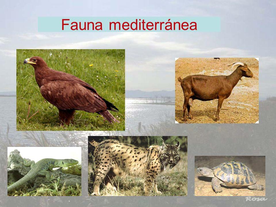 Fauna mediterránea