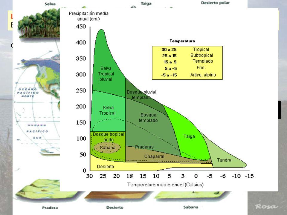 LA ECOSFERA: Es el ecosistema planetario, es decir, el ecosistema que ocupa la Biosfera: Formada por VIDA + EL MEDIO EN QUE INETRACCIONA CARACTERÍSTIC