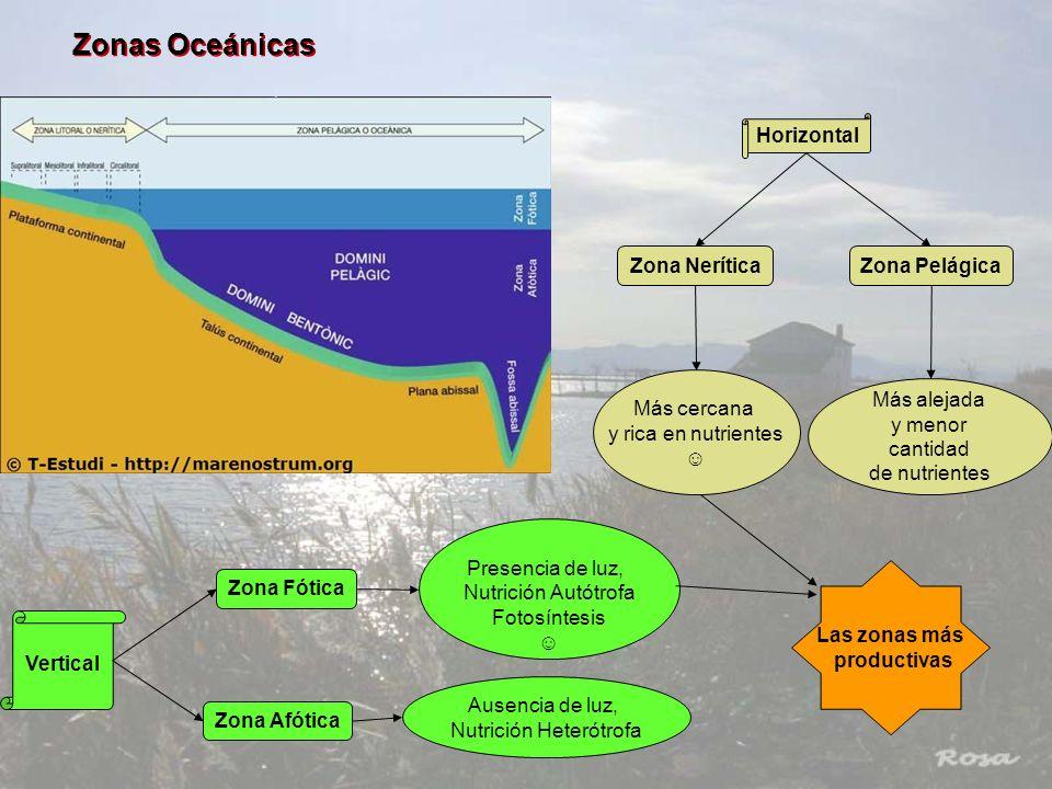 Zonas Oceánicas Horizontal Vertical Zona NeríticaZona Pelágica Zona Fótica Zona Afótica Más cercana y rica en nutrientes Más alejada y menor cantidad