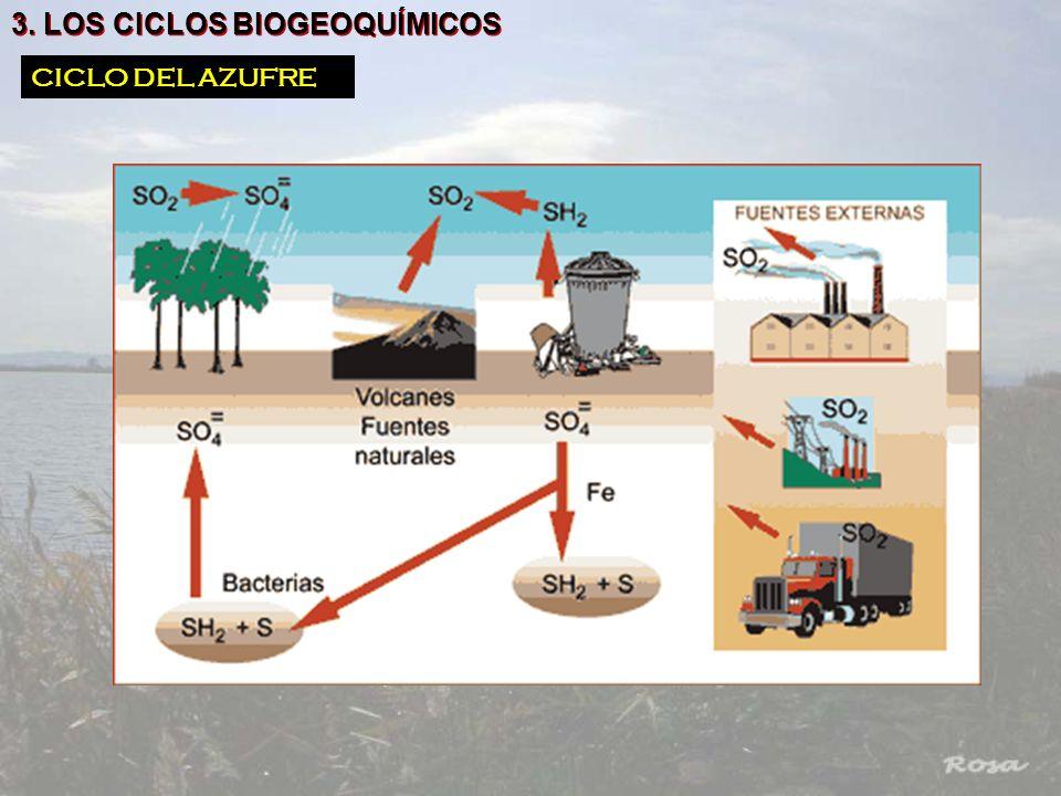 3. LOS CICLOS BIOGEOQUÍMICOS CICLO DEL AZUFRE