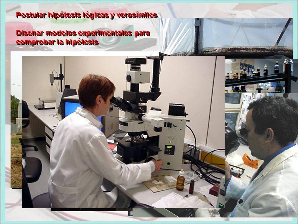 Postular hipótesis lógicas y verosímiles Diseñar modelos experimentales para comprobar la hipótesis Postular hipótesis lógicas y verosímiles Diseñar m