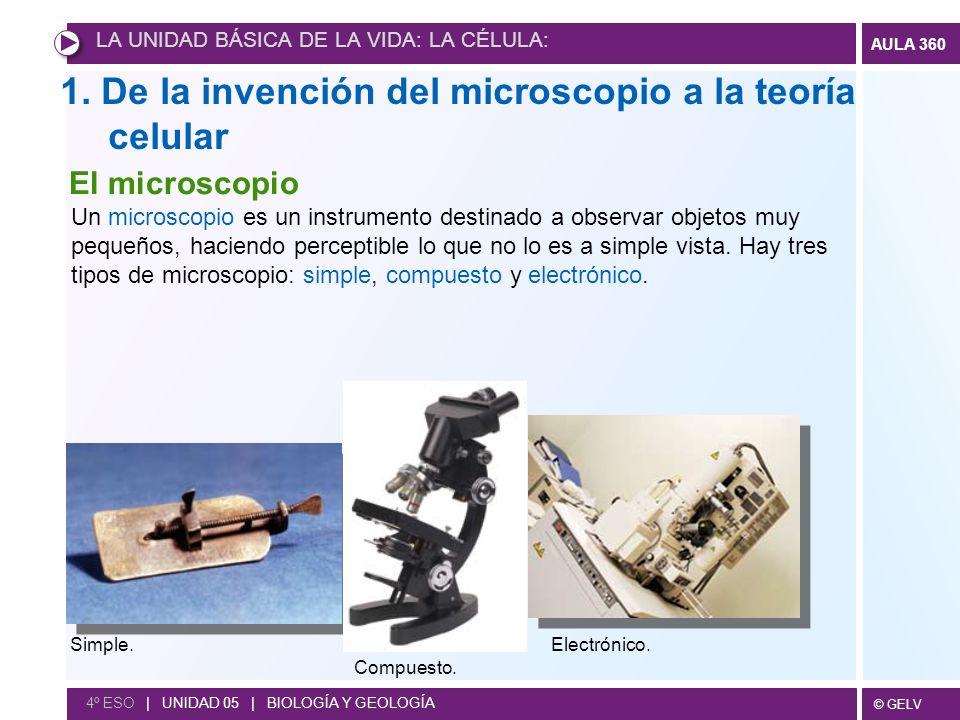 © GELV AULA 360 4º ESO | UNIDAD 05 | BIOLOGÍA Y GEOLOGÍA Fina lámina de corcho observada al microscopio óptico por Robert Hooke (primero en ver las células aunque aún no sabía lo que eran).