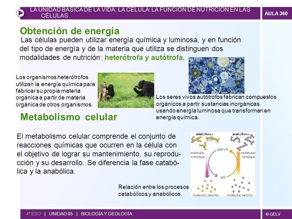 © GELV AULA 360 4º ESO | UNIDAD 05 | BIOLOGÍA Y GEOLOGÍA Las células pueden utilizar energía química y luminosa, y en función del tipo de energía y de