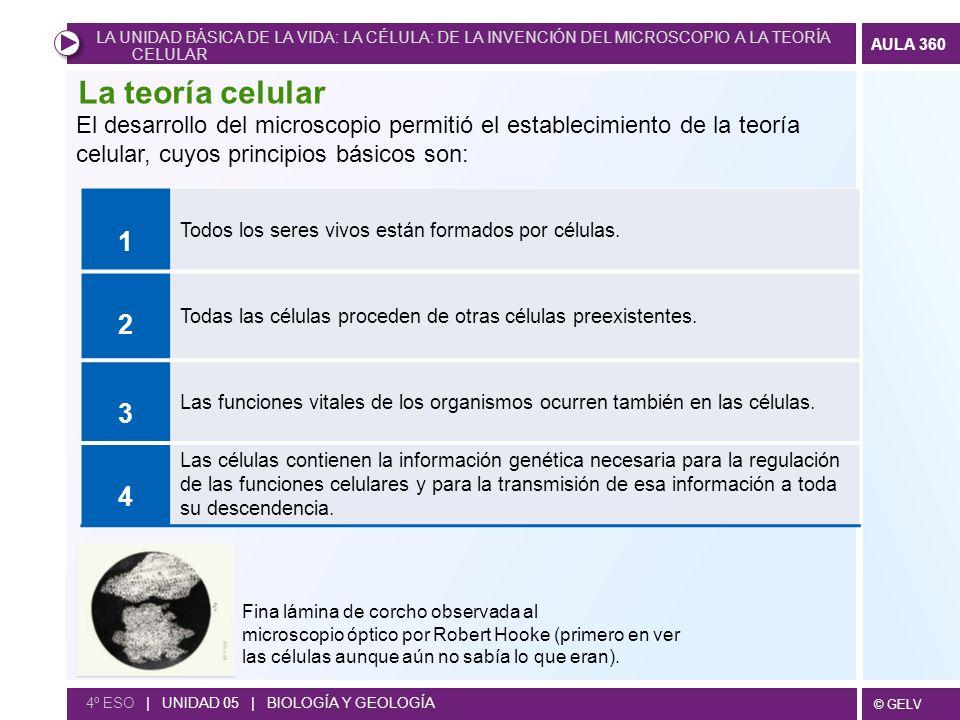 © GELV AULA 360 4º ESO | UNIDAD 05 | BIOLOGÍA Y GEOLOGÍA Son los siguientes: Microfotografía de un centrosoma.