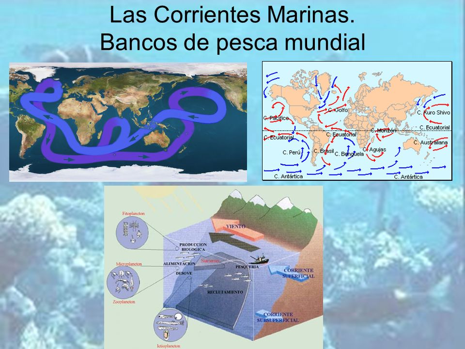 Las Corrientes Marinas. Bancos de pesca mundial