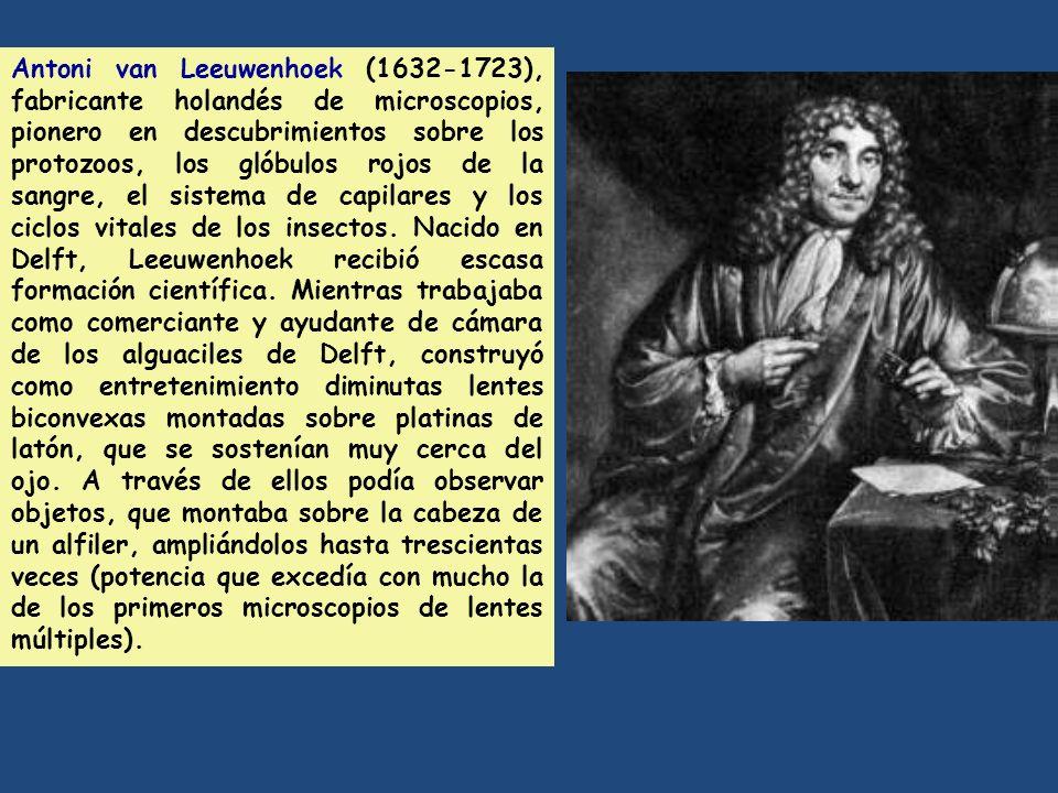 Antoni van Leeuwenhoek (1632-1723), fabricante holandés de microscopios, pionero en descubrimientos sobre los protozoos, los glóbulos rojos de la sang