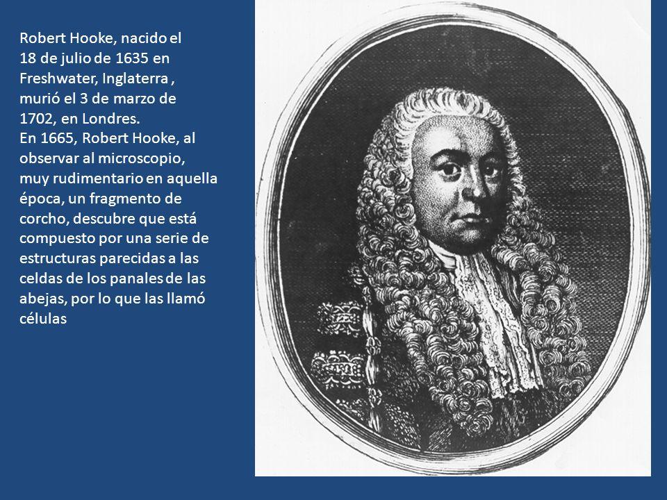 Robert Hooke, nacido el 18 de julio de 1635 en Freshwater, Inglaterra, murió el 3 de marzo de 1702, en Londres. En 1665, Robert Hooke, al observar al