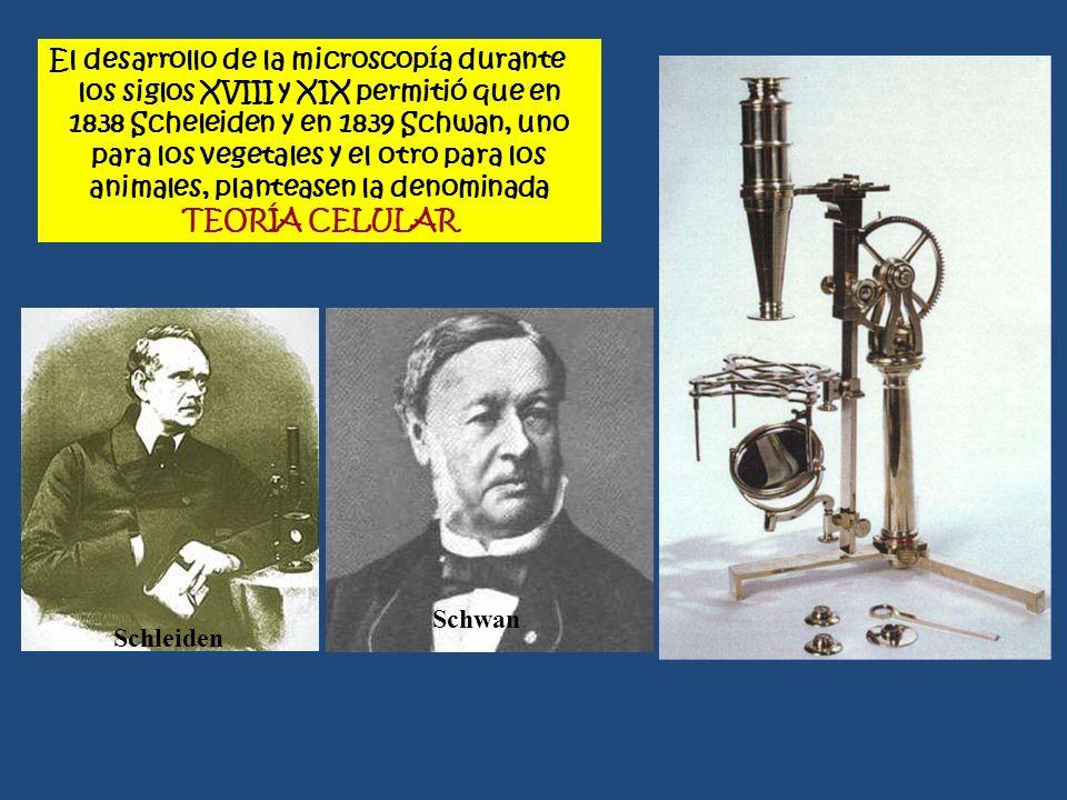 El desarrollo de la microscopía durante los siglos XVIII y XIX permitió que en 1838 Scheleiden y en 1839 Schwan, uno para los vegetales y el otro para