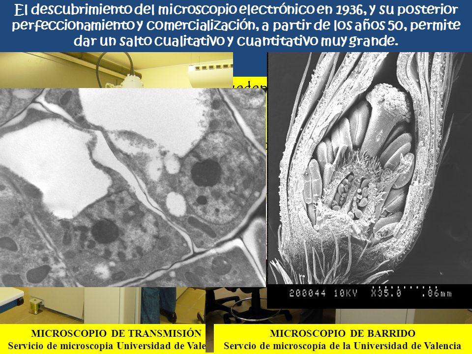 Los microscopios electrónicos pueden ser de dos tipos: De transmisión (el haz de electrones atraviesa los objetos) De barrido (El haz de electrones re