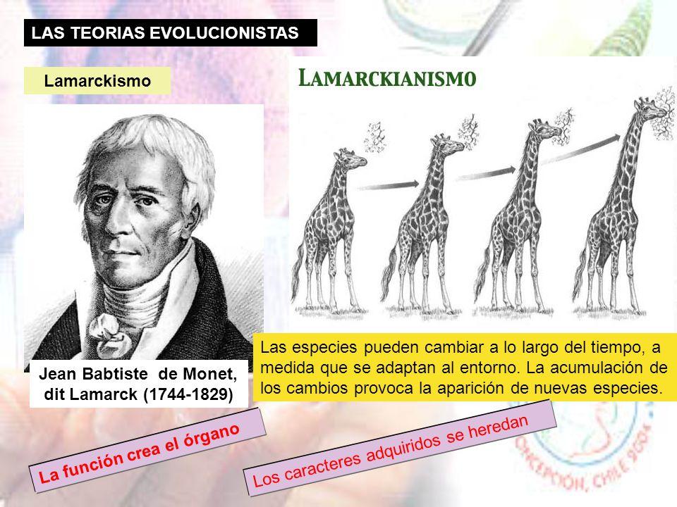 Ideas que explicaban la gran biodiversidad CREACIONISMO: Los seres vivos fueron creados por Dios en su origen y han permanecido así a lo largo del tie