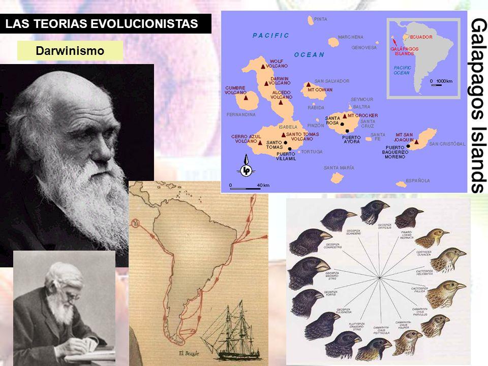 LAS TEORIAS EVOLUCIONISTAS Lamarckismo Jean Babtiste de Monet, dit Lamarck (1744-1829) Las especies pueden cambiar a lo largo del tiempo, a medida que