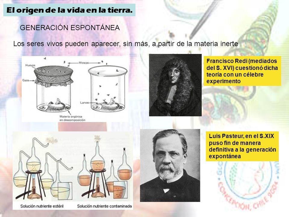Composición de los seres vivos BIOELEMENTOS BIOMOLÉCULAS CELULAS