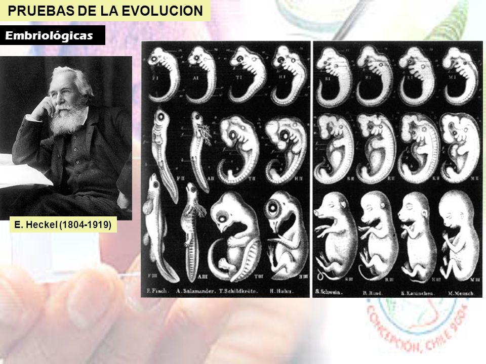 PRUEBAS DE LA EVOLUCION Bioquímicas