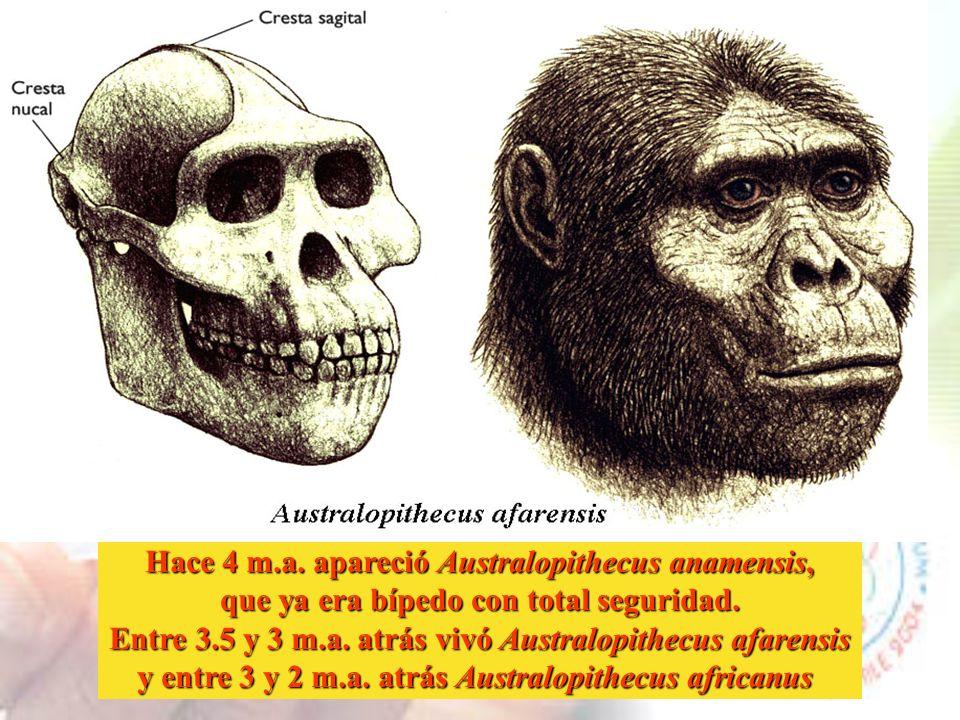 Este es el árbol evolutivo de nuestra familia, los homínidos Conozcamos a algunos de nuestros antepasados...