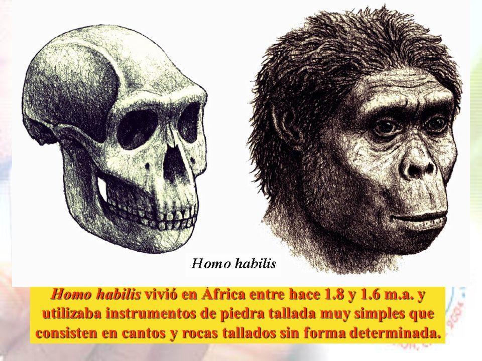 Los caracteres específicos de la bipedestación aparecen entre los australopitecos. Estos homínidos primitivos practicaban una forma de bipedestación p