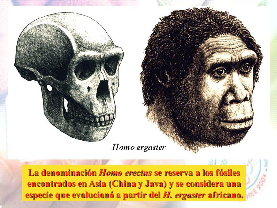 Homo habilis fabricaba instrumentos simples de madera y piedra