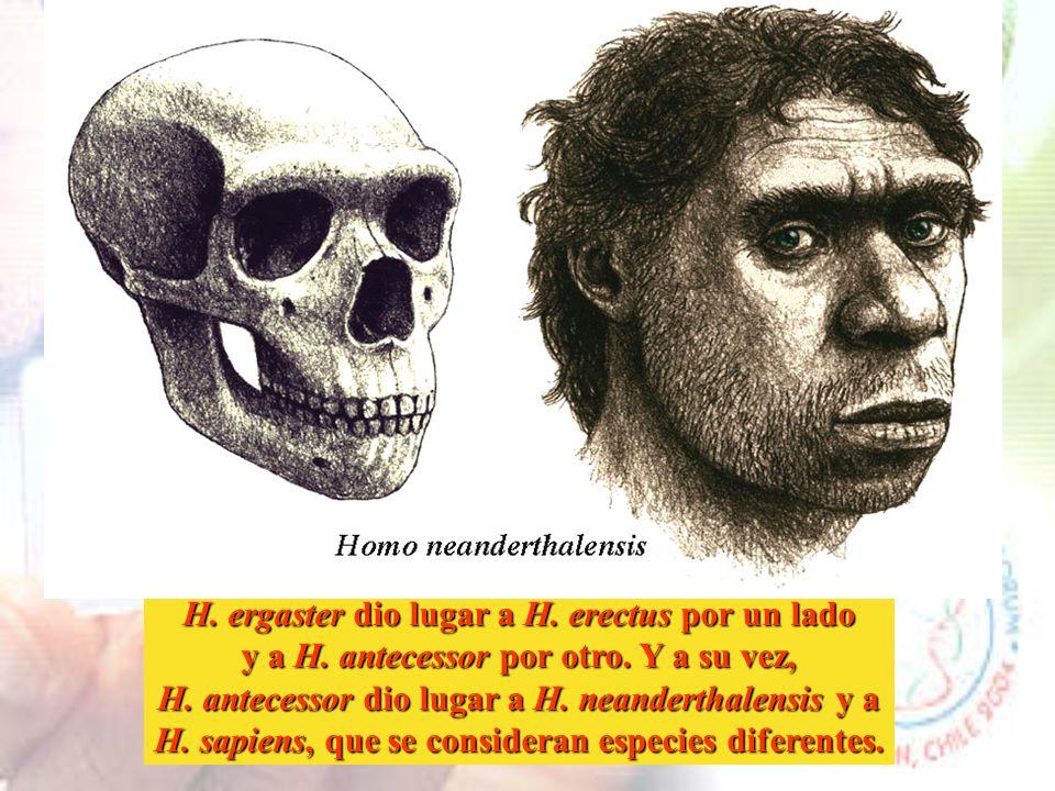 Homo erectus ya conocía y utilizaba el fuego