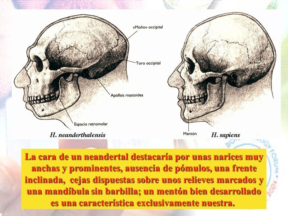 Europa ha sido poblada por humanos en dos oleadas, la primera hace unos 800.000 años por H. antecessor que daría lugar, ya en Europa, a H. neanderthal