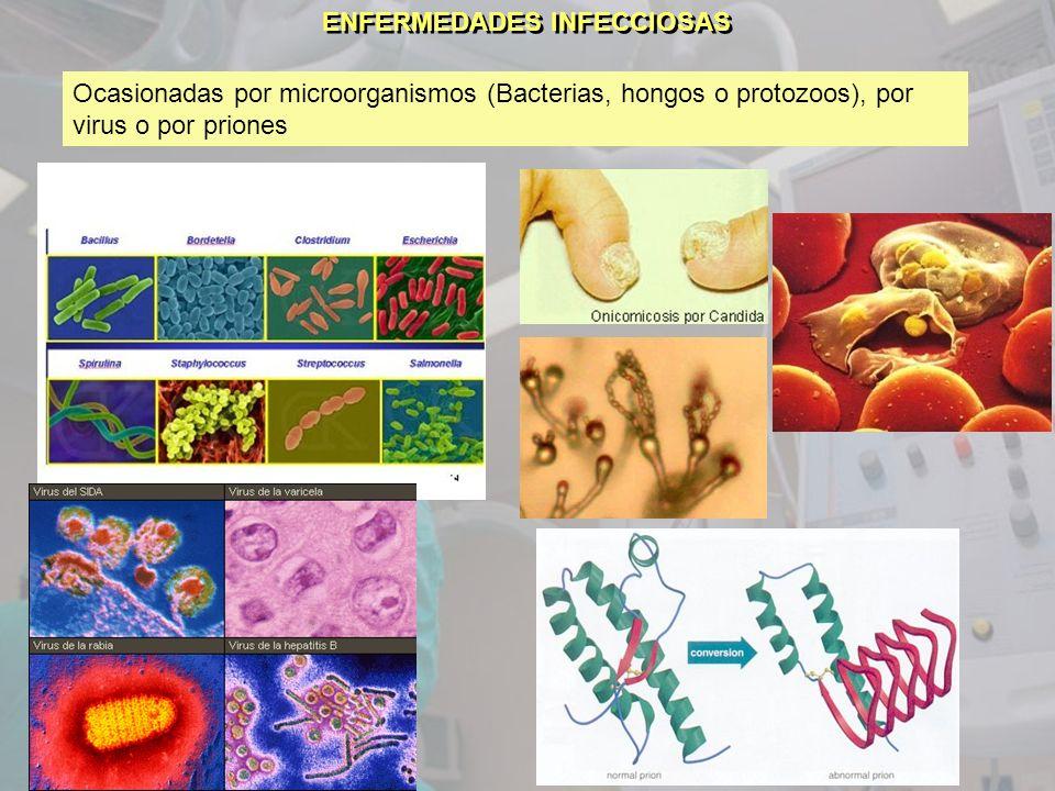 ENFERMEDADES INFECCIOSAS Ocasionadas por microorganismos (Bacterias, hongos o protozoos), por virus o por priones