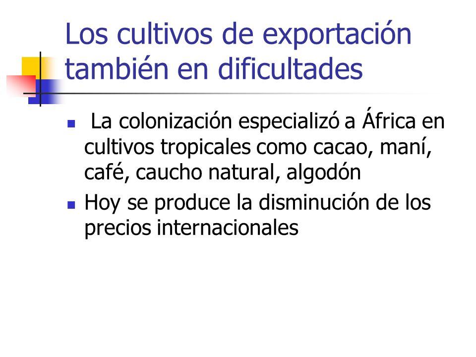 Los cultivos de exportación también en dificultades La colonización especializó a África en cultivos tropicales como cacao, maní, café, caucho natural