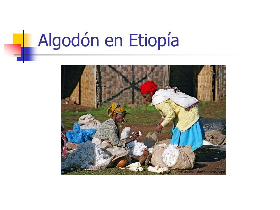 Algodón en Etiopía