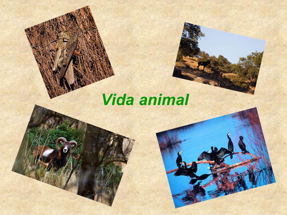 La fauna es rica y variada e incluye todo tipo de animales. El ecosistema de bosque mediterráneo es muy sensible a la desertización si se destruye su