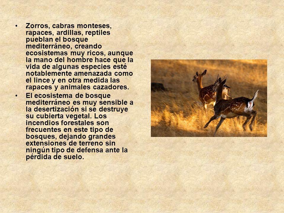 Zorros, cabras monteses, rapaces, ardillas, reptiles pueblan el bosque mediterráneo, creando ecosistemas muy ricos, aunque la mano del hombre hace que la vida de algunas especies esté notablemente amenazada como el lince y en otra medida las rapaces y animales cazadores.