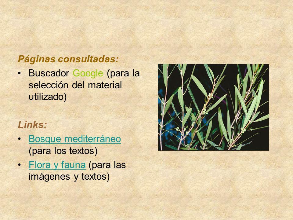 Páginas consultadas: Buscador Google (para la selección del material utilizado) Links: Bosque mediterráneo (para los textos)Bosque mediterráneo Flora y fauna (para las imágenes y textos)Flora y fauna