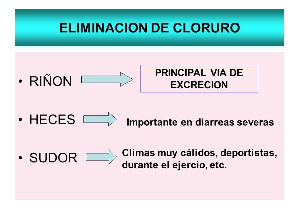ELIMINACION DE CLORURO RIÑON HECES SUDOR Importante en diarreas severas Climas muy cálidos, deportistas, durante el ejercio, etc. PRINCIPAL VIA DE EXC