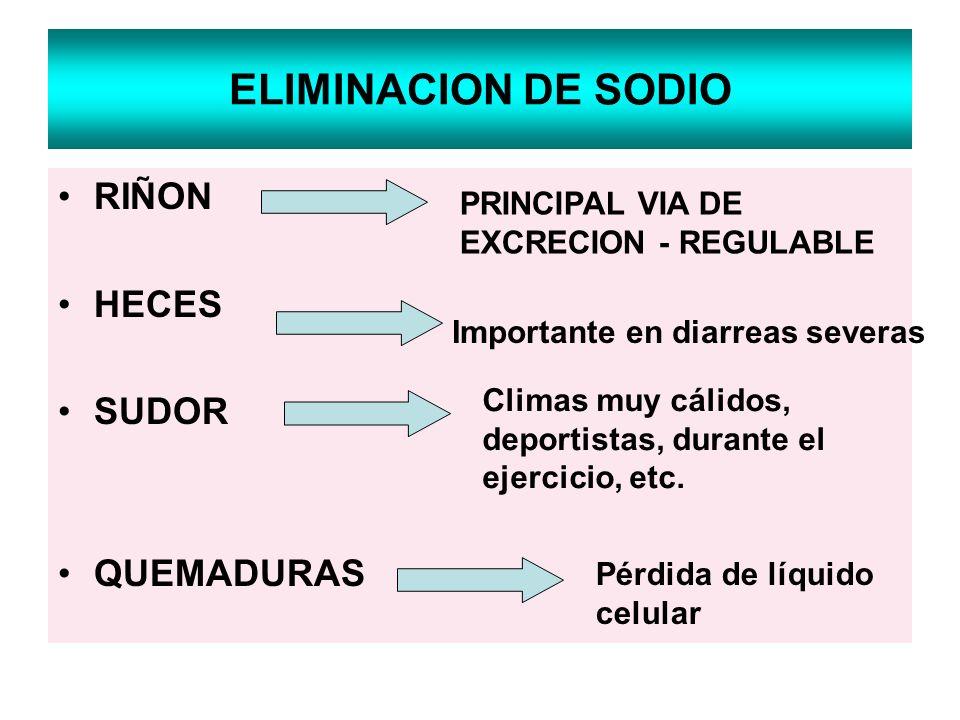 ELIMINACION DE SODIO RIÑON HECES SUDOR QUEMADURAS Importante en diarreas severas Climas muy cálidos, deportistas, durante el ejercicio, etc. Pérdida d