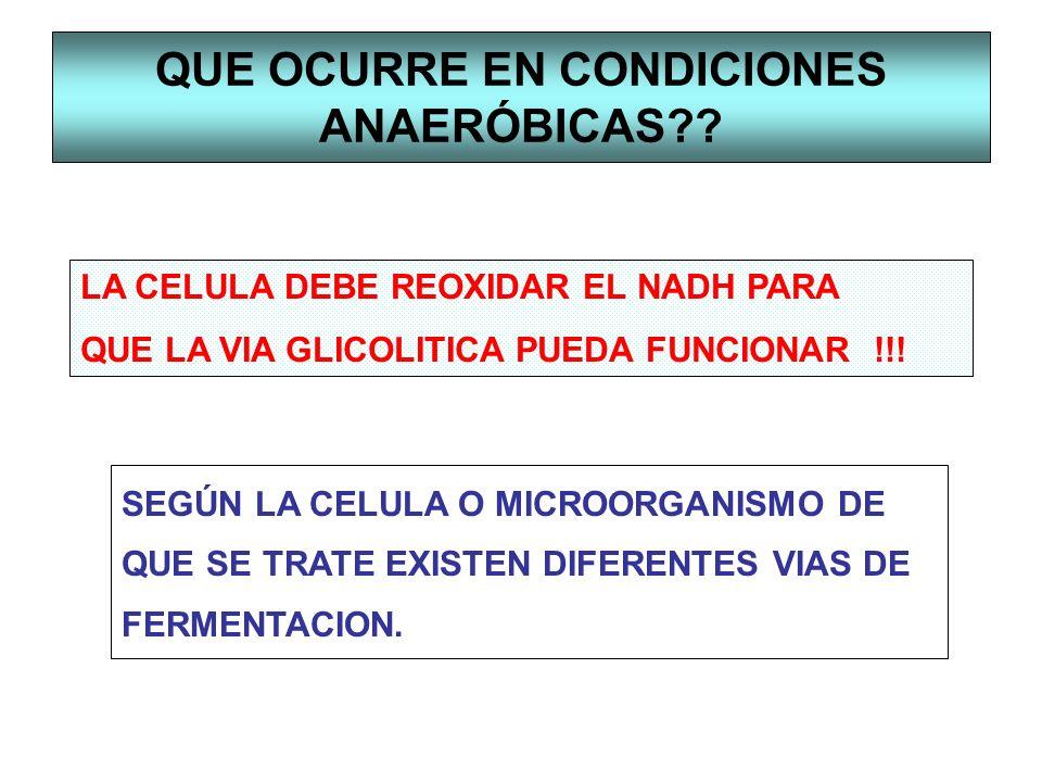 QUE OCURRE EN CONDICIONES ANAERÓBICAS?? LA CELULA DEBE REOXIDAR EL NADH PARA QUE LA VIA GLICOLITICA PUEDA FUNCIONAR !!! SEGÚN LA CELULA O MICROORGANIS