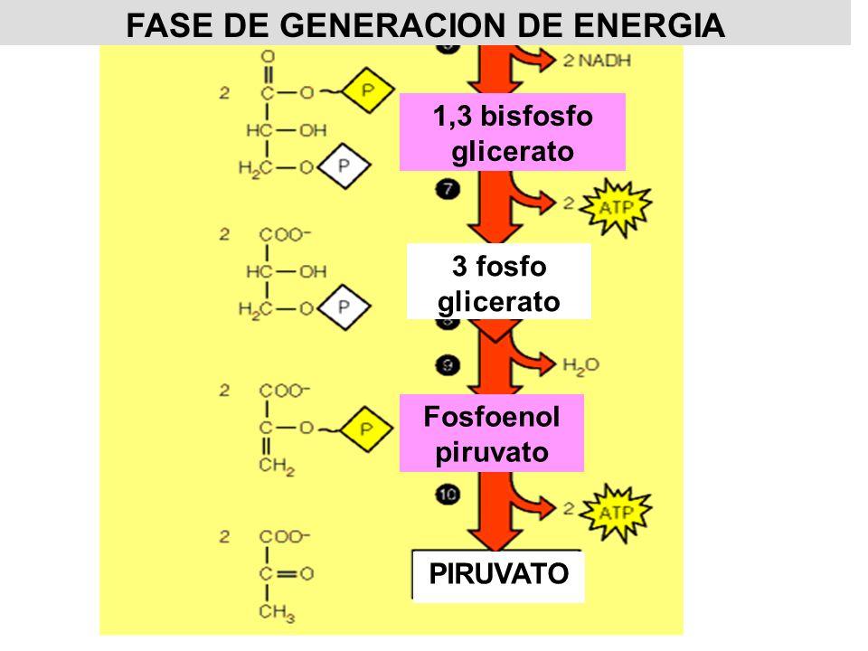 Glucosa Glucosa-6-P Hexoquinasa Glucosa-6-P Fructosa-6-P Fosfoglucosa isomerasa