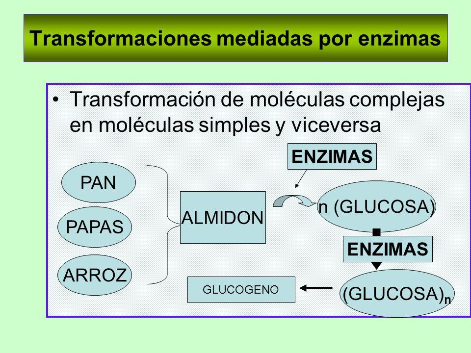 Transformaciones mediadas por enzimas Transformación de moléculas complejas en moléculas simples y viceversa PAN PAPAS ARROZ ALMIDON GLUCOGENO (GLUCOS