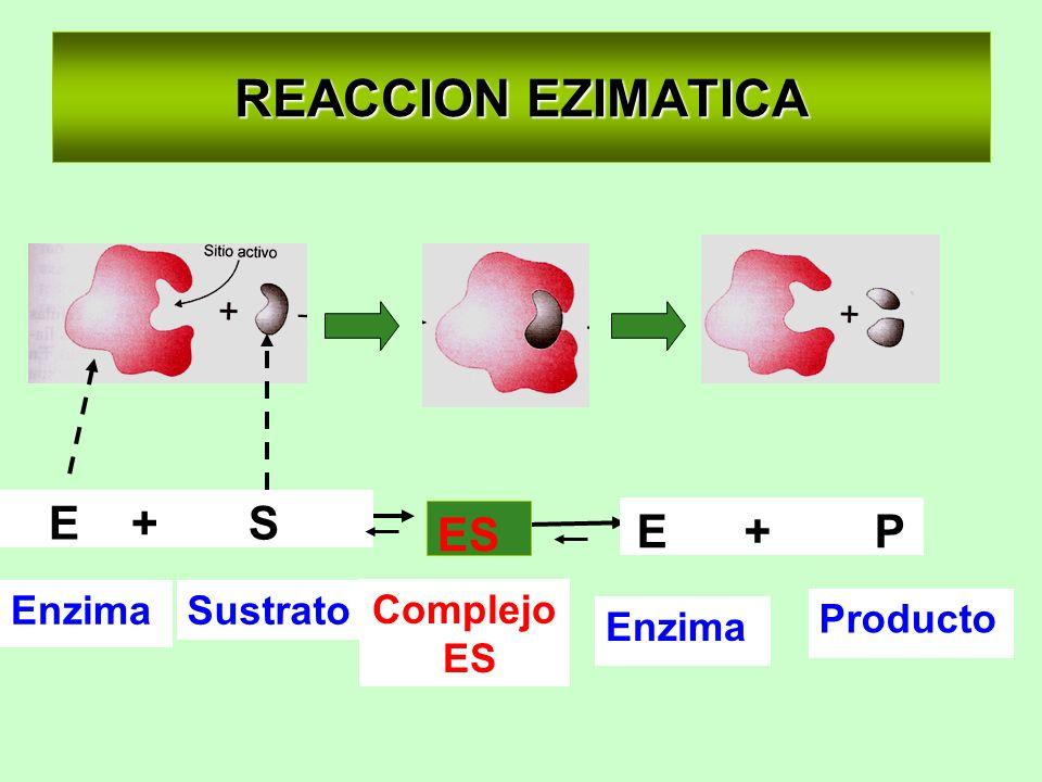 REACCION EZIMATICA Enzima Producto SustratoEnzima E + S E + P Complejo ES