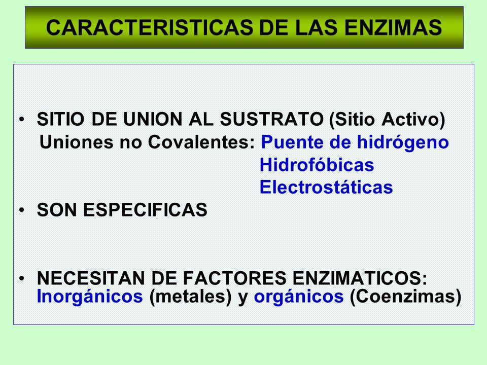 CARACTERISTICAS DE LAS ENZIMAS SITIO DE UNION AL SUSTRATO (Sitio Activo) Uniones no Covalentes: Puente de hidrógeno Hidrofóbicas Electrostáticas SON E