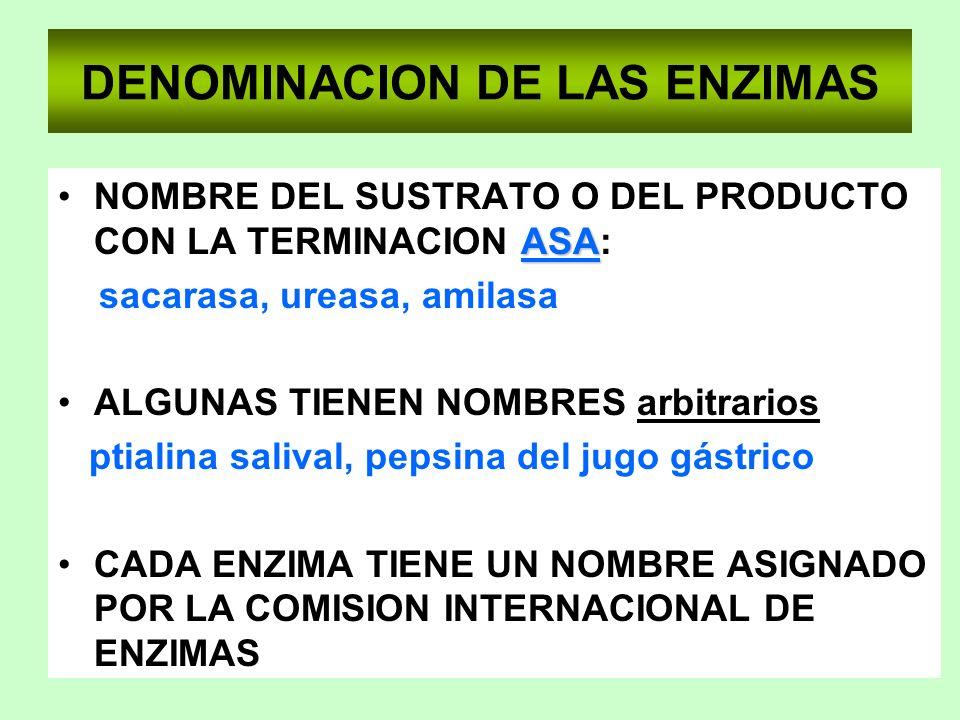 DENOMINACION DE LAS ENZIMAS ASANOMBRE DEL SUSTRATO O DEL PRODUCTO CON LA TERMINACION ASA: sacarasa, ureasa, amilasa ALGUNAS TIENEN NOMBRES arbitrarios