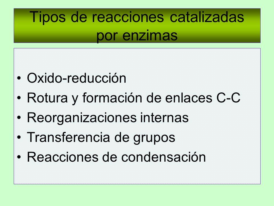 Tipos de reacciones catalizadas por enzimas Oxido-reducción Rotura y formación de enlaces C-C Reorganizaciones internas Transferencia de grupos Reacci