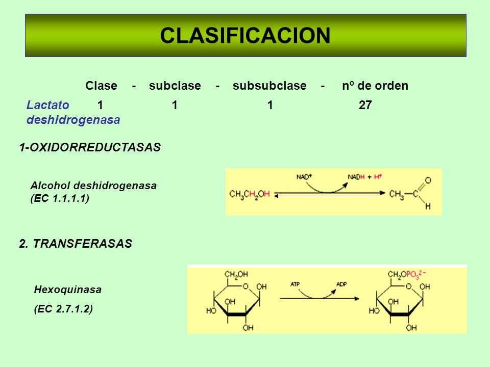 CLASIFICACION 1-OXIDORREDUCTASAS 2. TRANSFERASAS Alcohol deshidrogenasa (EC 1.1.1.1) Hexoquinasa (EC 2.7.1.2) Clase - subclase - subsubclase - nº de o