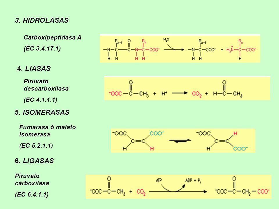 4. LIASAS 5. ISOMERASAS 6. LIGASAS Piruvato descarboxilasa (EC 4.1.1.1) Fumarasa ó malato isomerasa (EC 5.2.1.1) Piruvato carboxilasa (EC 6.4.1.1) 3.