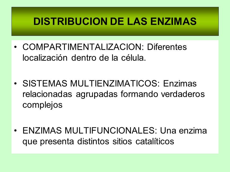 DISTRIBUCION DE LAS ENZIMAS COMPARTIMENTALIZACION: Diferentes localización dentro de la célula. SISTEMAS MULTIENZIMATICOS: Enzimas relacionadas agrupa